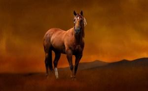 Art piece titled After. A Lakota war pony.