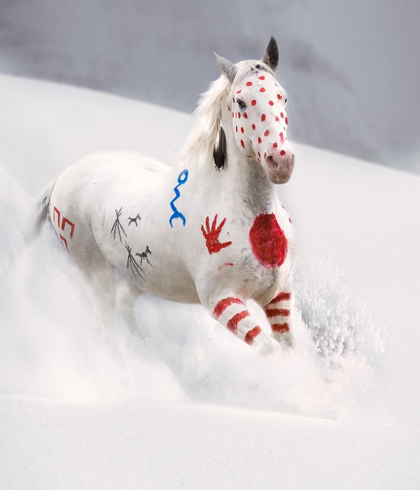 Painted Blackfeet war Pony in snow