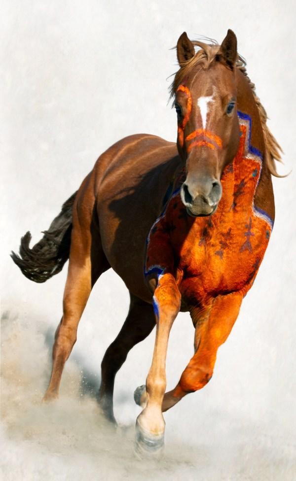 Painted Crow War Pony running toward viewer