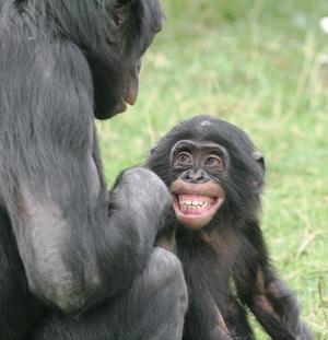 Comportamiento Sexual: Bonobos (2/2)