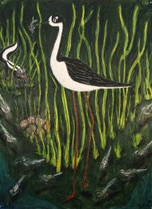 Black Necked Stilt (1)