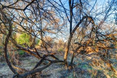 Winter, Neighborhood Park, Fort Worth, Texas February 2016