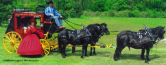 Cathy Eggers with 1865 Wells Fargo Stagecoach & Drive and Horses from CommerFord Zoo
