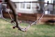 Spring Buds (10 of 14)
