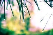 Waterdrops (10 of 10)