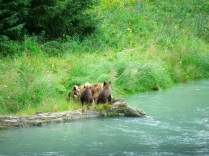 Alaska-20100729-20100807 314
