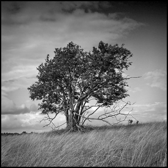 Shared from http://fin6.com/2013/12/black-and-white-tree/