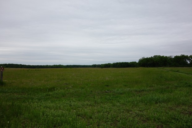 The Empty Field We Visit