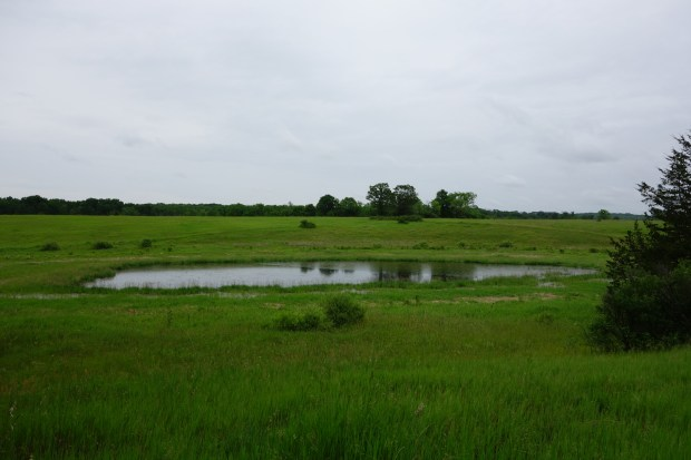 Pond in the Field