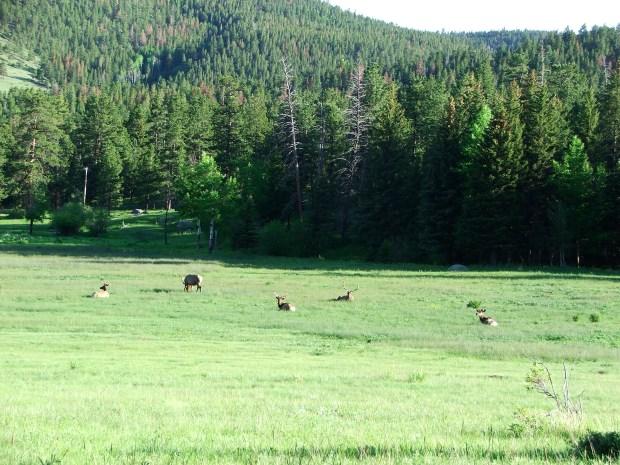 Colorado-2009 265