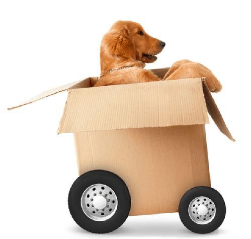 doginbox
