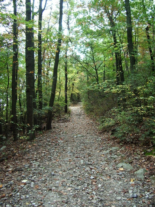 Image of a wheelchair accessible trail in NJ.
