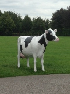 The Hollies Farm Shop Cow
