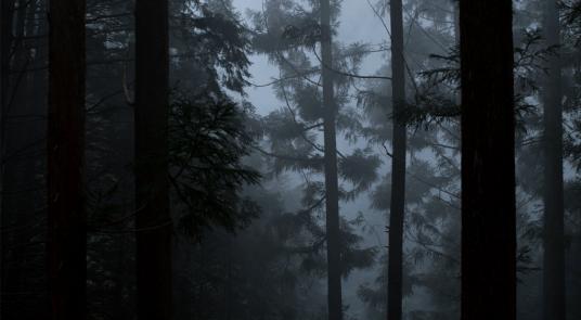 Aesop-Hwyl-Forest-2000x1100px