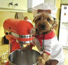 Dog Chef