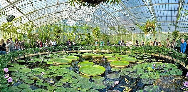 Kew_Gardens_Waterlily_House_-_Sept_2008