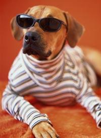 from DogsWearingSunglasses.com