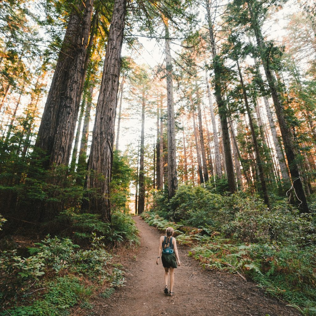 Woman hiking outdoors among tall trees and grass