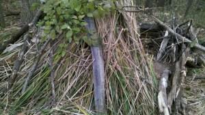 Survival Shelter Debris Hut Using Cattails
