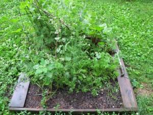 4x4 Survival Garden