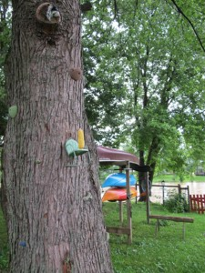 Maple Tree w/ Squirrel Feeder