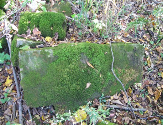 Moss on remnants of a rock wall: Photo by Creek Stewart