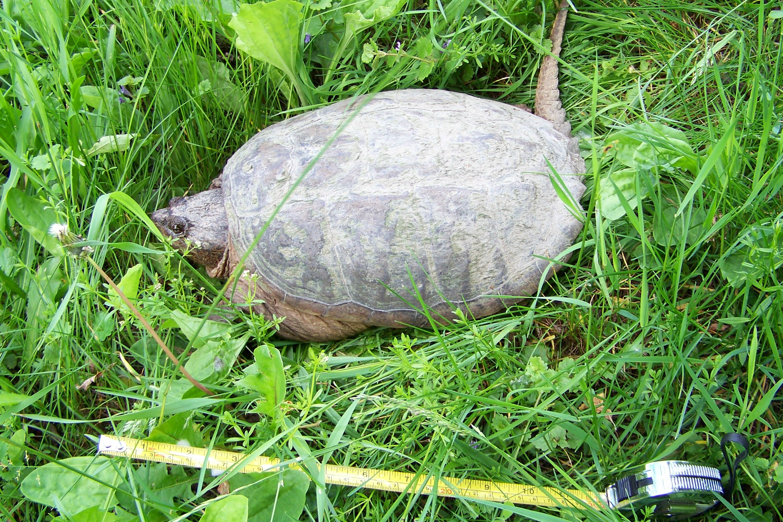 turtlewithtape