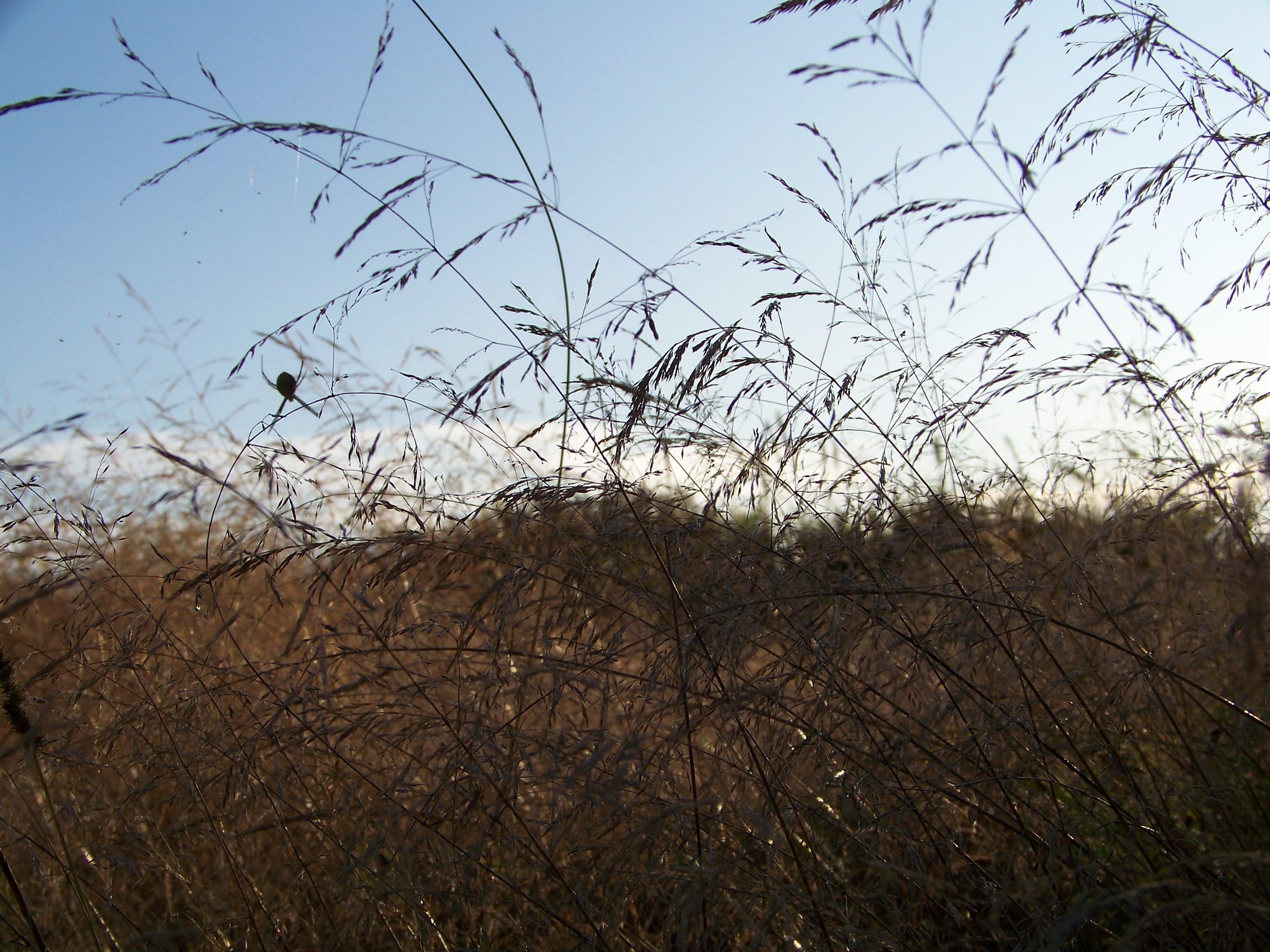 walkgrasswithspider