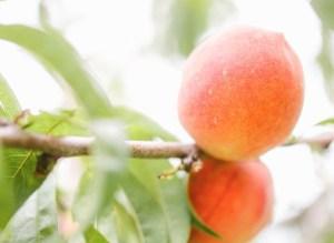 Organic des moines iowa apple orchard