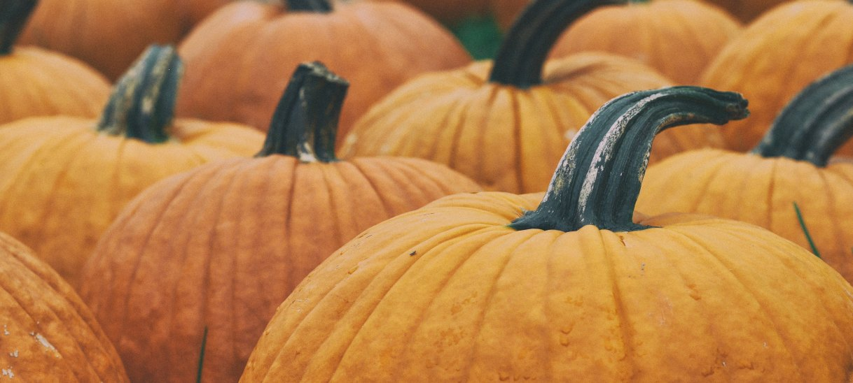 Apple & Pumpkin Festival Weekends