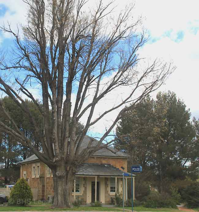 Bungendore Courthouse (former), early Australian courthouses, Colonial Australian courthouses, historical Australian courthouses, Australian legal history, Bungendore