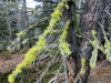 Bright lichen moss