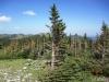 3120-wind-blasted-tree