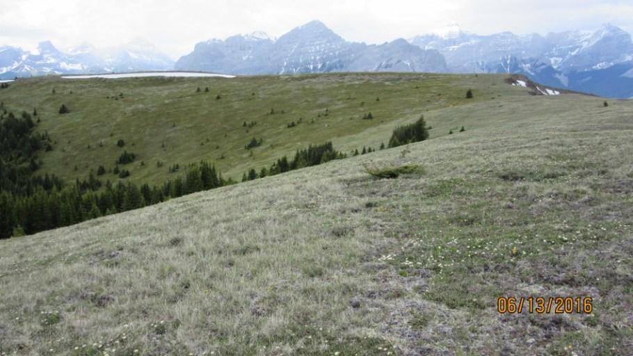 Old Baldy Ridge