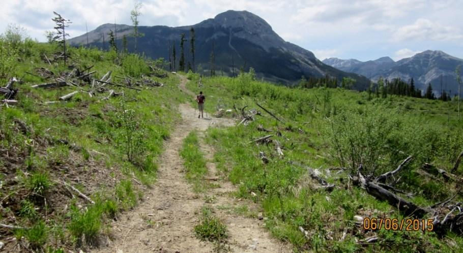 Trail through cutblock, Mt Baldy ahead