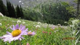 Smuts Pass to Birdwood Pass to Burstall Pass