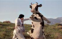 Log 069 ~Will's Got New Beef~