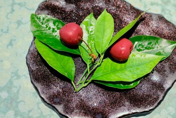 Disfrutar - Cherries 2017