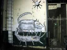 Dos perros. Graffiti. Zagreb. Croatia. WU PHOTO © Willy Uribe Archivo fotográfico Reportajes