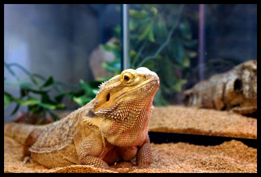 Click to enter the reptile gallery