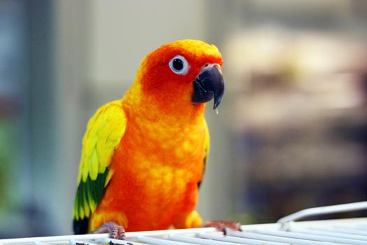 Click to enter the bird gallery