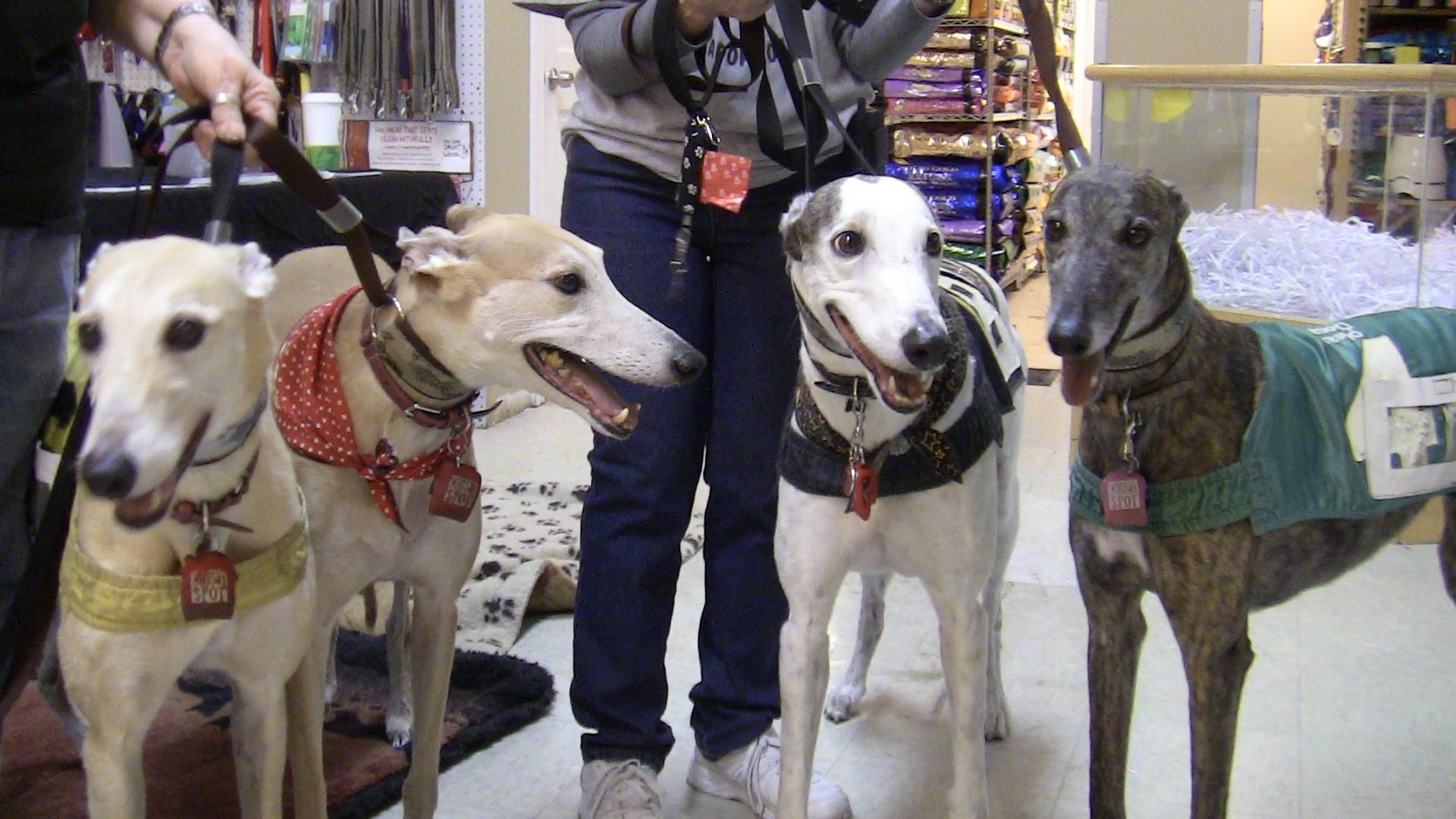 Midwest Greyhound Rescue Wilmette Pet Center