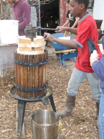 pressing the cider