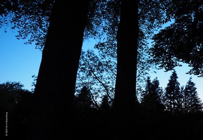 beukenbomen