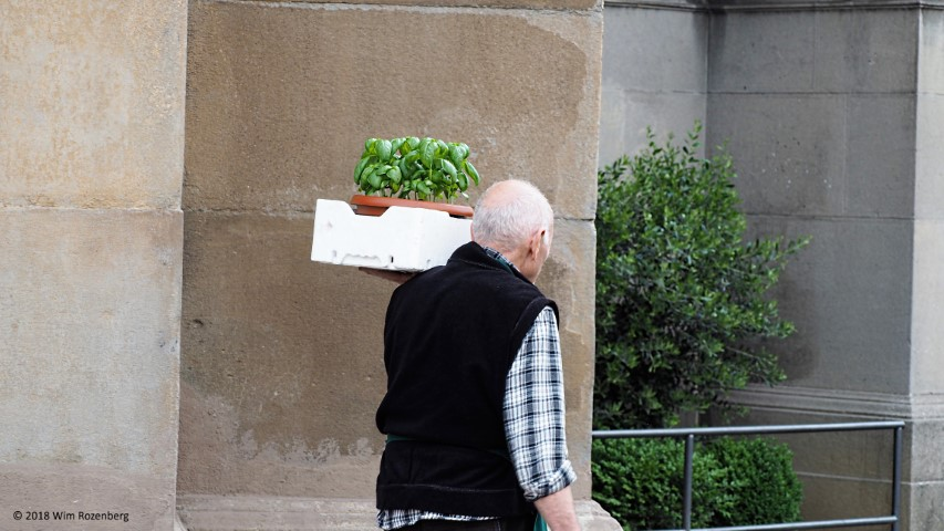 oude man met basilicum in doos, Bergamo, Italie
