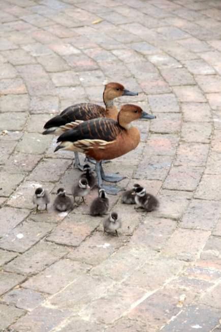 Gestresste Eltern