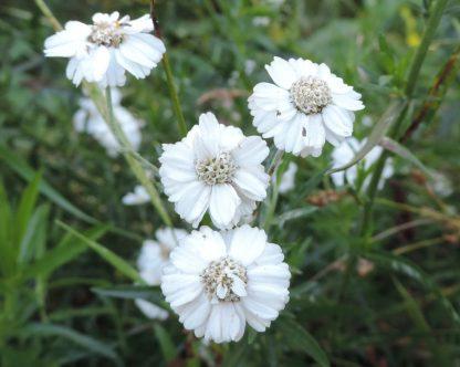 bloemen met rand bloemen in het midden