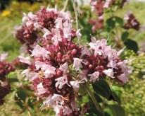 bloemen-wilde-marjoleinmarjolein-4
