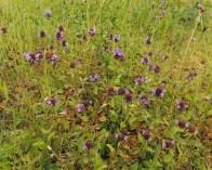 brunel-planten-1