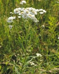 wilde-bertram-bloemscherm